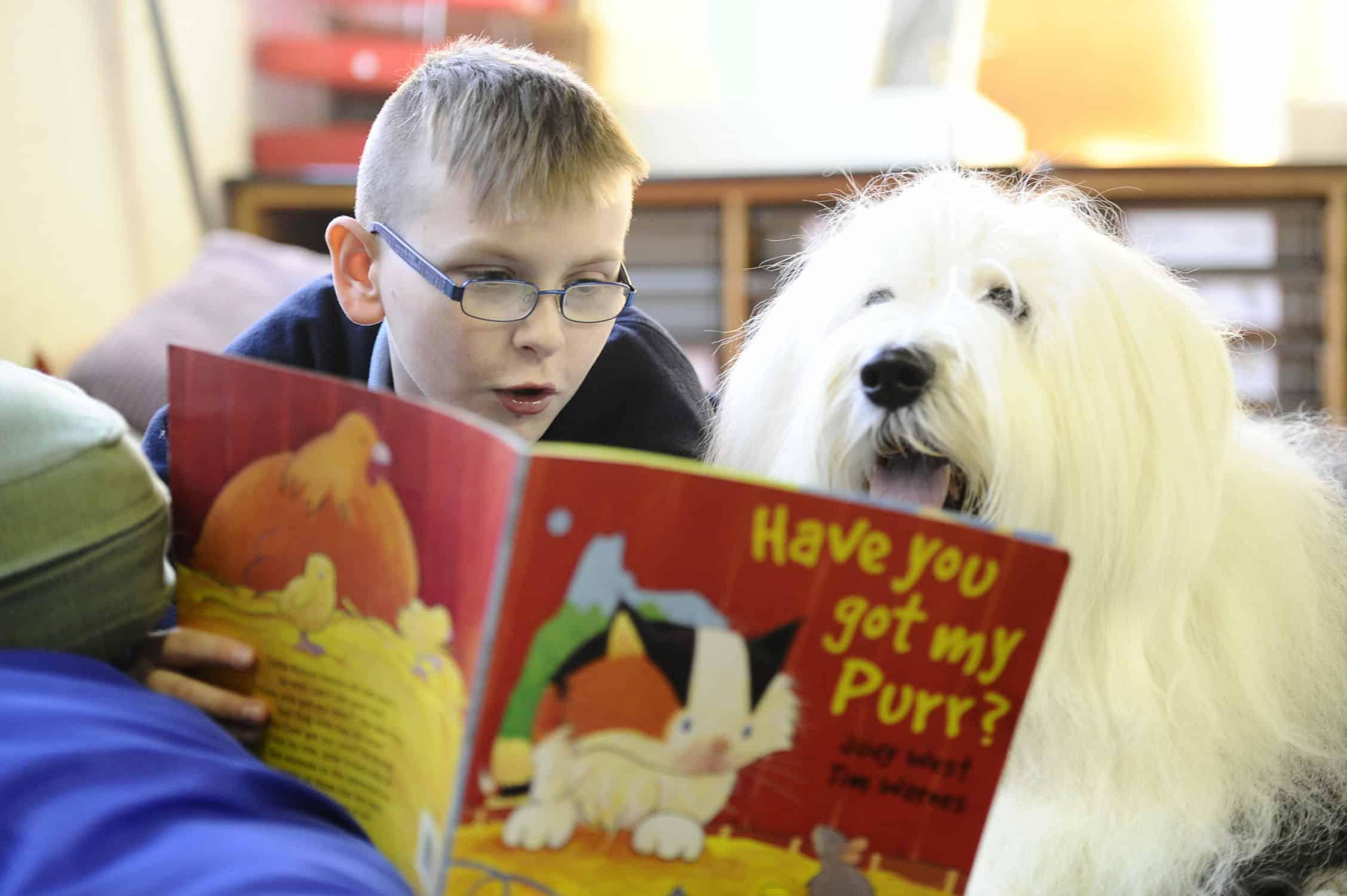 Lorsque les enfants lisent aux chiens, leur capacité de lecture et leur confiance en eux s'en trouvent renforcées. Le Kennel Club explique pourquoi il forme des chiens à la lecture dans les écoles afin d'améliorer l'alphabétisation des enfants.